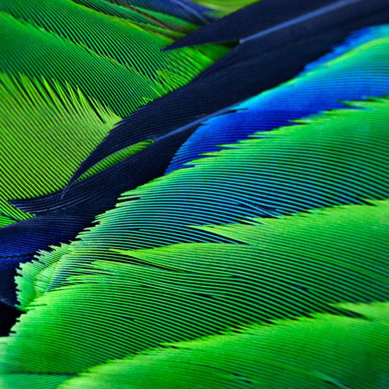 Katerina Kaloudi - Microcosmos-Macrocosmos - Unknown Butterfly, 2014.